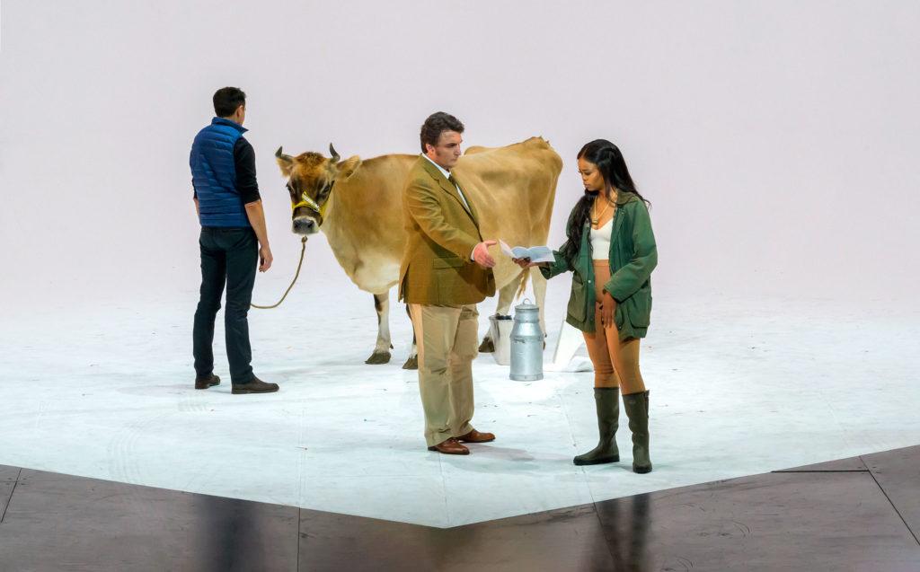 Виолетта Валери доит корову