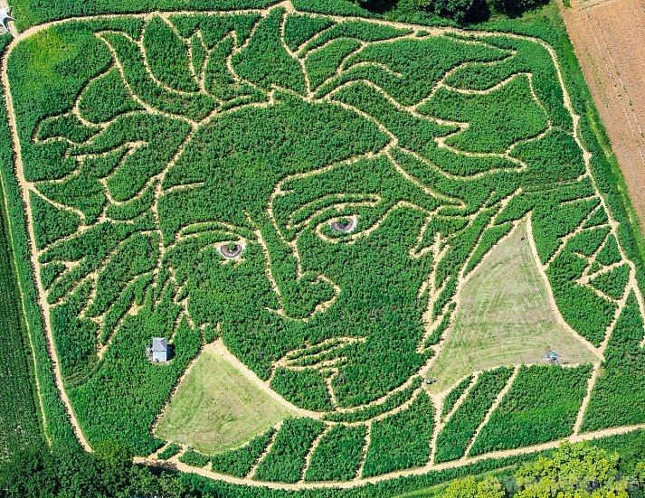Немецкие фермеры вырастили на поле изображение Бетховена